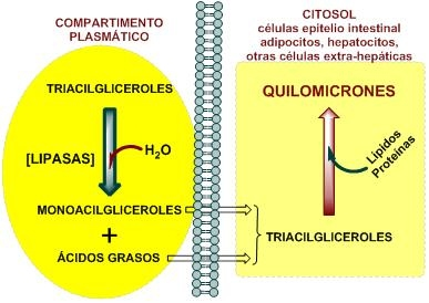 Unidad de nutrición alimentación y metabolismo del dr jesús bernardo