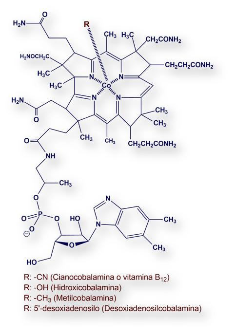 Vitamina B12 Cobalamina Info Farmacia