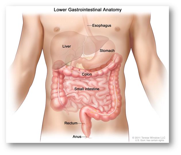 Cancer colon jovenes sintomas. Cancer colon jovenes sintomas Cancer colon sintomas